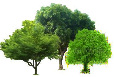trees1 1