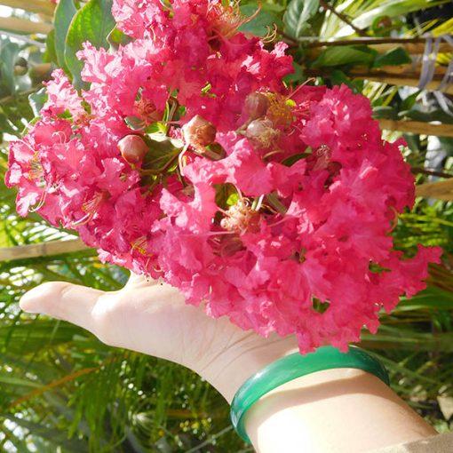hoa cay tuong vi