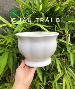 Chau Nhua Trai Bi