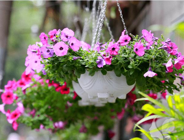 hoa da yen thao trong chau treo 600x457 1