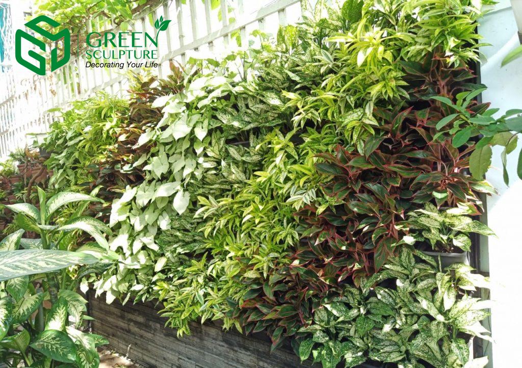 Việc lựa chọn cây trồng vườn tường xanh