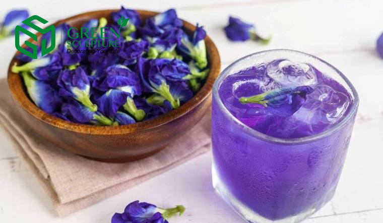 Trà thảo mộc từ thảo dược hoa Đậu biếc giúp ngăn chặn quá trình oxy hóa, giúp dưỡng da
