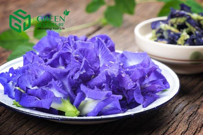 Trà thảo mộc từ hoa Đậu biếc