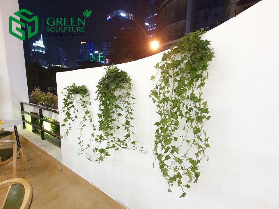 Cây Thường xuân có tác dụng phủ xanh tường giúp tạo không gian tươi mát