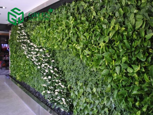Mô hình vườn tường xanh đang được trồng phổ biến hiện nay